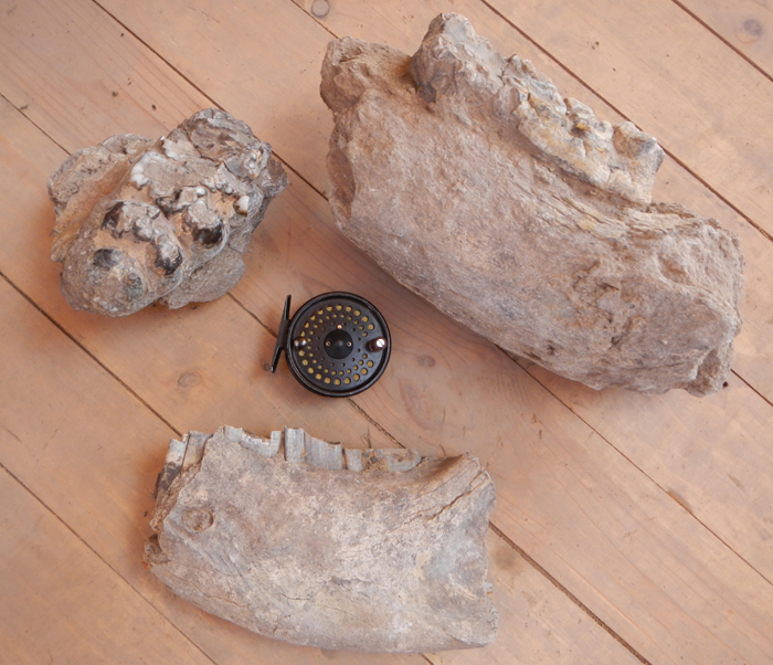 dinosaur-mandible-fossils-with-teeth-argentina1