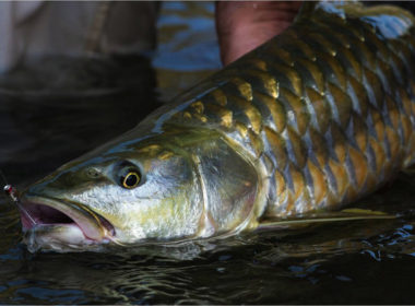 Mighty_Mahseer